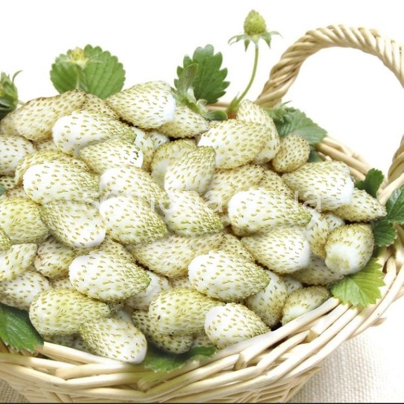 Clip pretty girl nude dowload